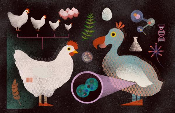 Illustration by Francesca Chan
